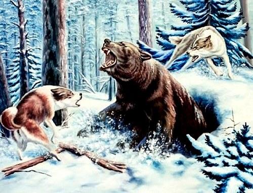 На медведя нужно охотиться с умом и с собаками!