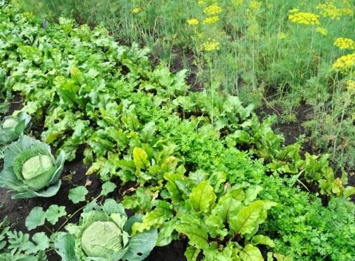 При посадке овощей не стоит забывать о предшественниках