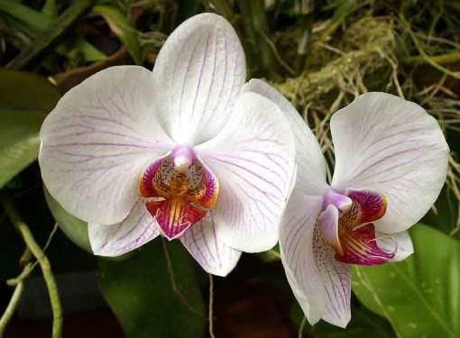 Уход за орхидеей прост