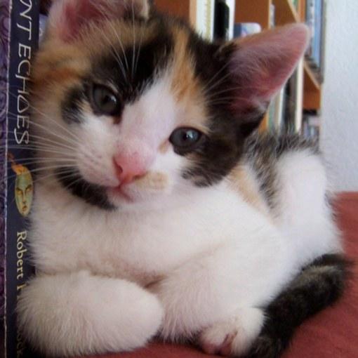 уличный котенок