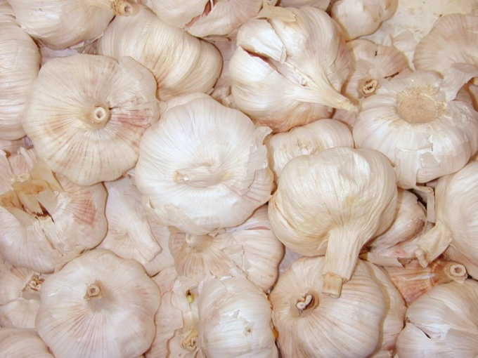 Freezing garlic is one of the most practical ways of preservation for the winter