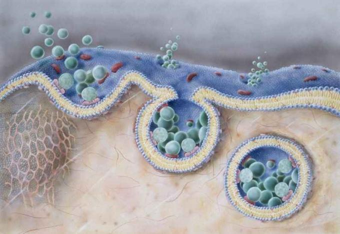 Какую функцию выполняет оболочка клетки