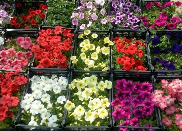 Seedlings: flower