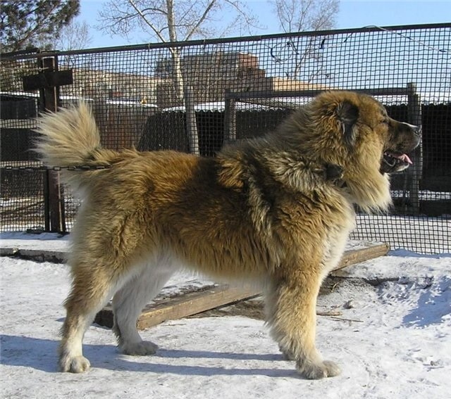 Какую собаку завести в загородном доме