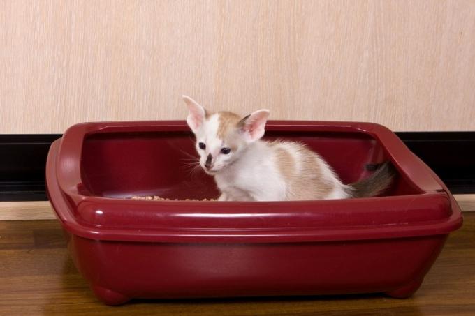 Чтобы приучить котенка к туалету, выберите правильный лоток