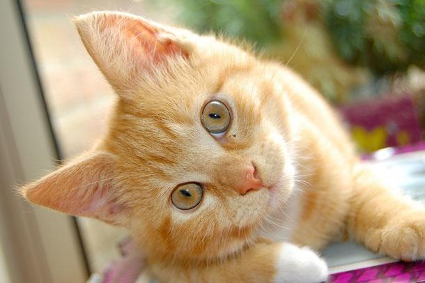 Что делать, если кошка кашляет
