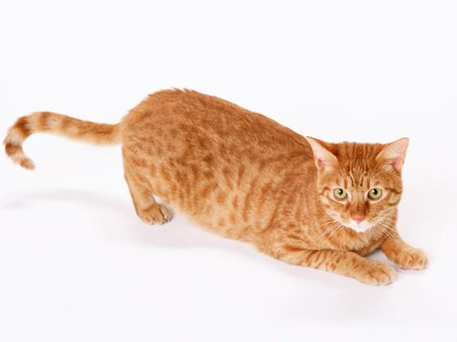 Что делать, если кошка много пьет