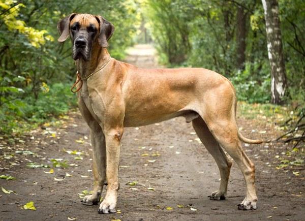 Выбор большой собаки - ответственное дело