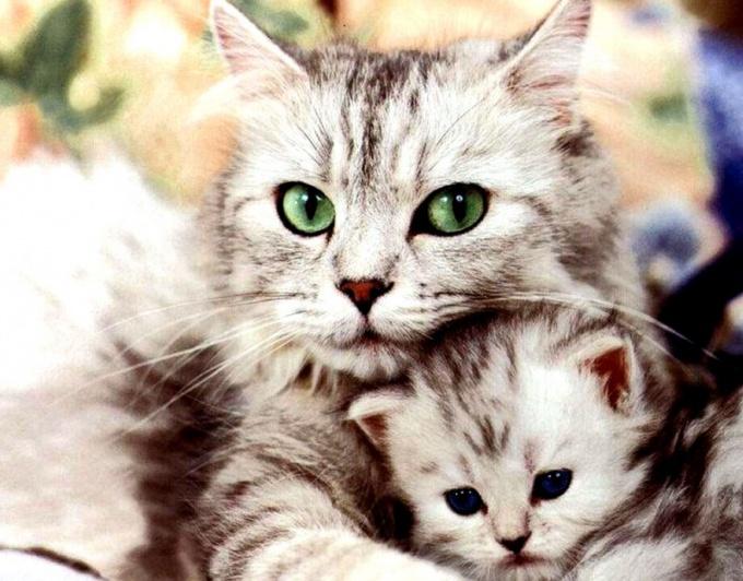 Стерилизация кошки - это оперативное вмешательство в ее половую систему