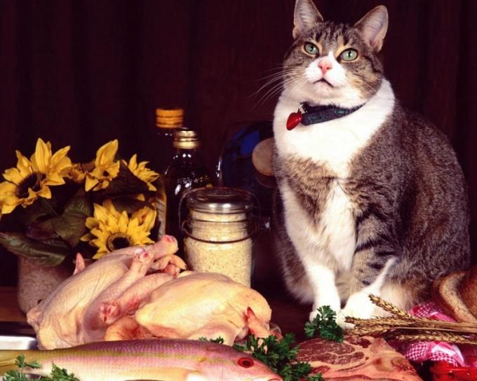 Как кормить кота натуральной едой
