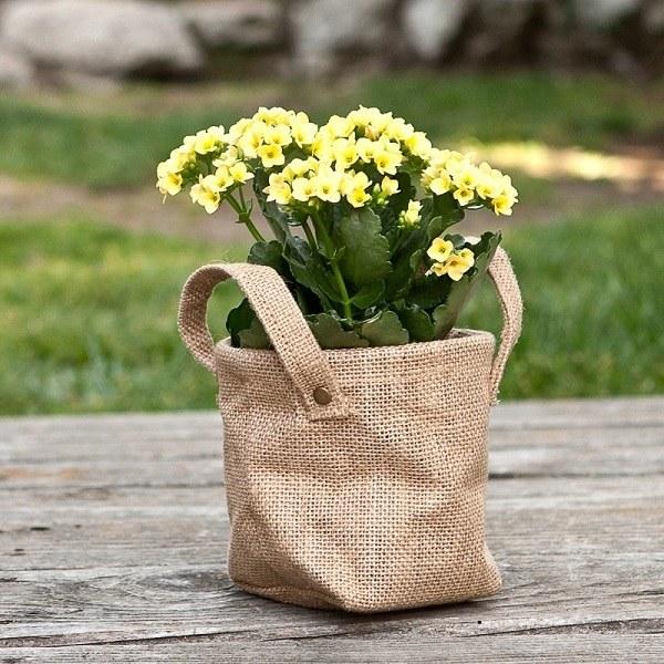 Как подарить цветок в горшке