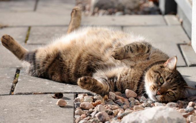 Кот, больной диабетом
