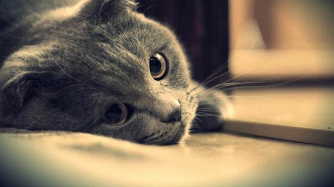 Что делать, если кошка отказывается от еды и воды