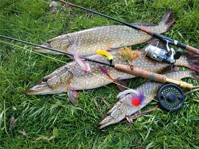 How to choose a spinning rod for pike