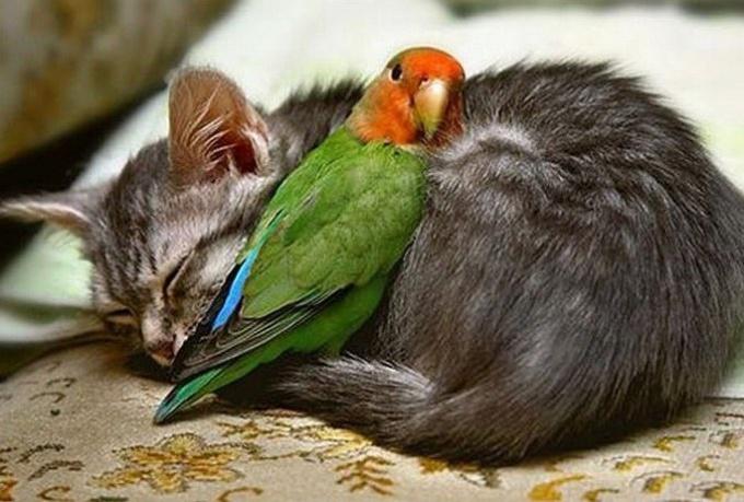 Кошка дрожит