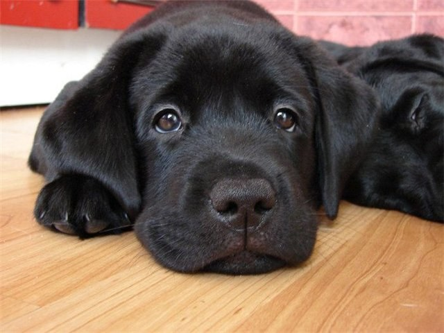 Как лечить собак антибиотиками