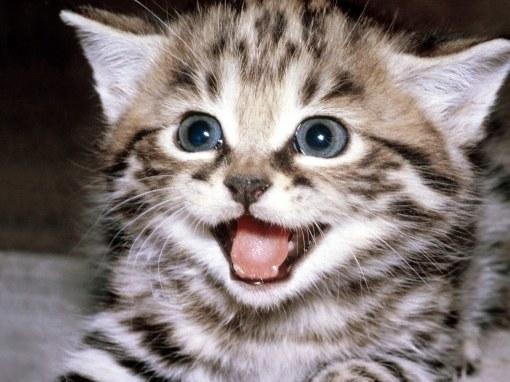 When do kittens change teeth