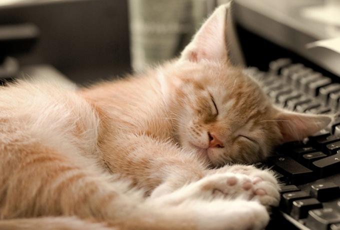 Длительный кошачий сон - это вполне естественное явление!