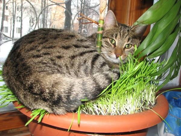 Гамавит для вашей кошки