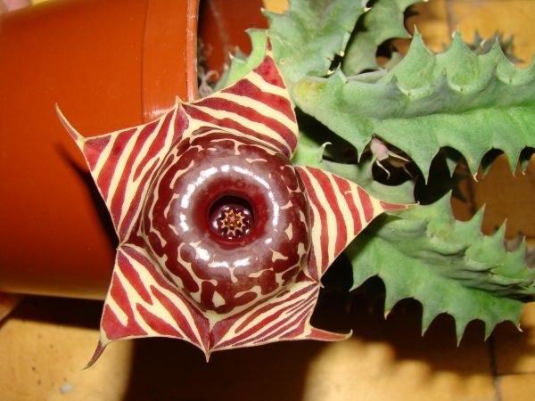 Какие комнатные растения не требуют частого полива