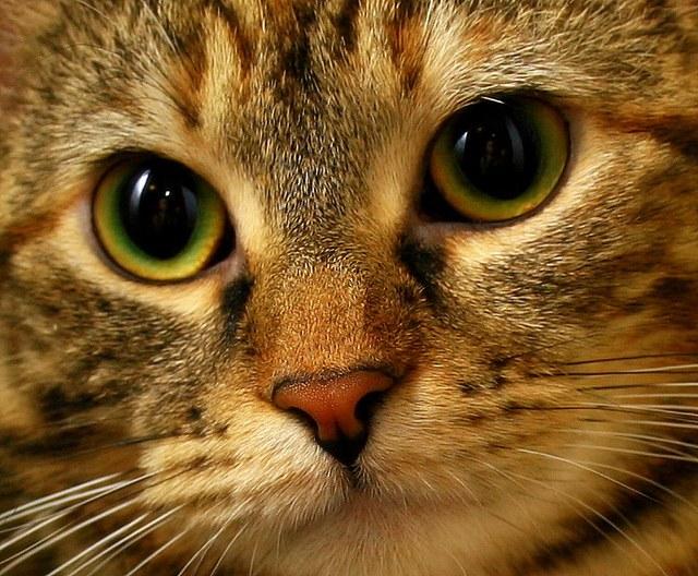 Мочекаменная болезнь у кошек: причины развития
