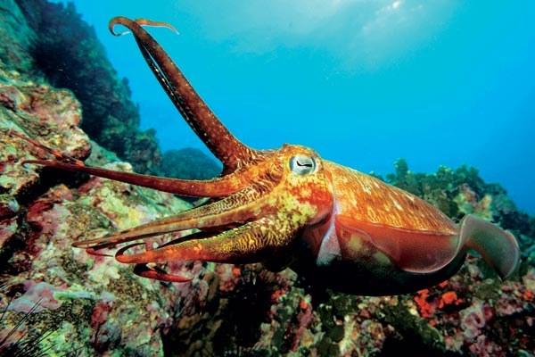 Головоногие моллюски: краткая характеристика класса
