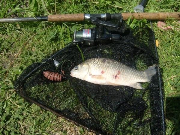 Секреты рыбака: донка на карася