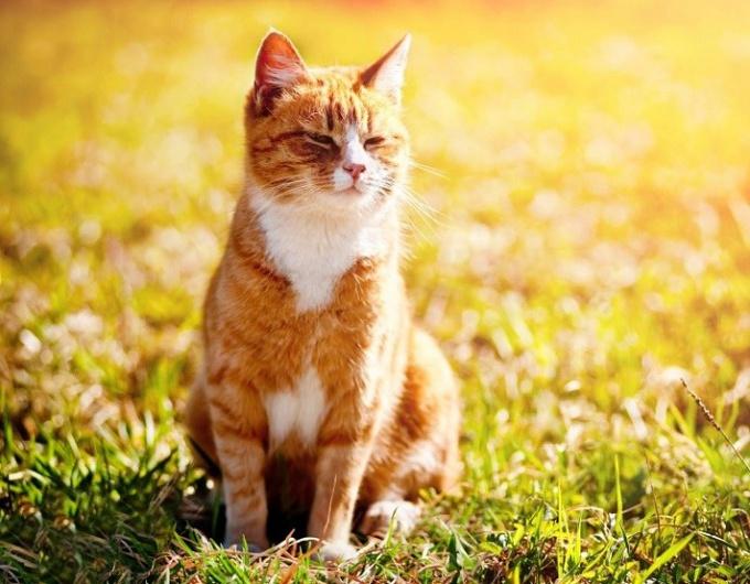 Как понять, когда нужно делать кошке противозачаточный укол