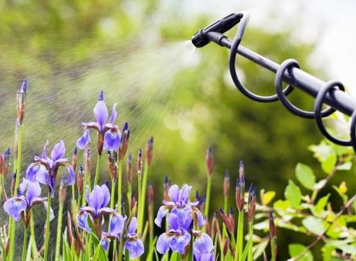 Полив - одно из самых важных мероприятий по уходу за растениями