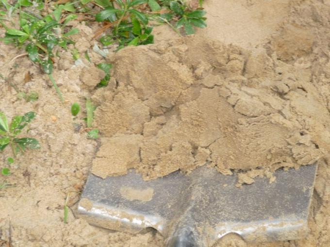Sandy soil in the garden