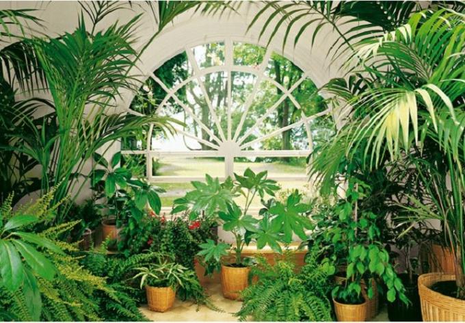 Как сделать на лоджии зимний сад