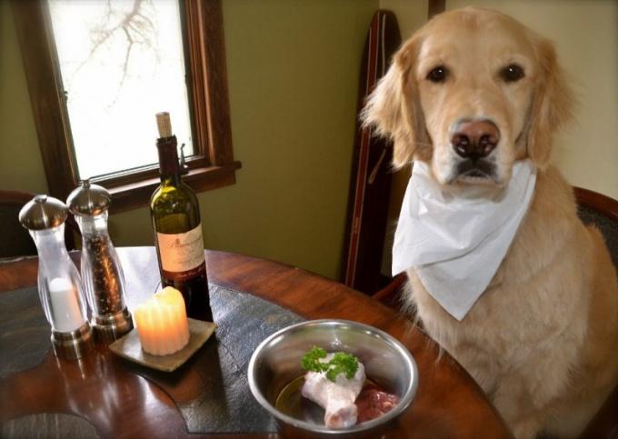 Можно ли кормить собак обычной едой