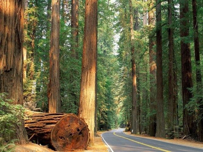 Лес как объект использования