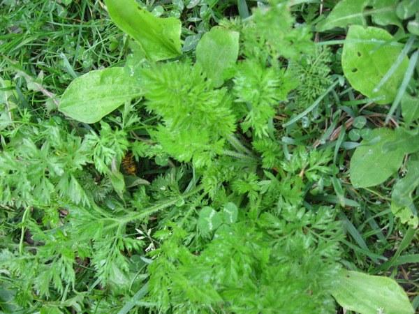 Как использовать скошенную траву как удобрение