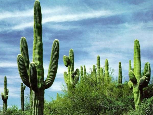 Какие растения являются символами стран