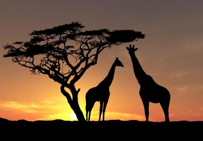 Как путешествовать по Африке