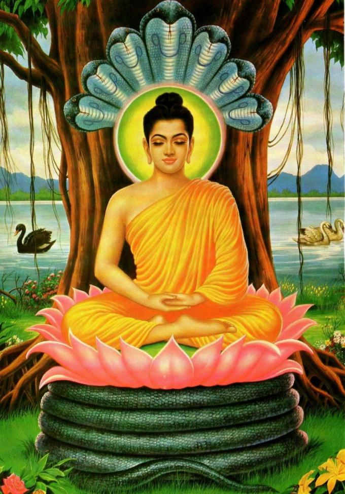 Будда медитирует под деревом