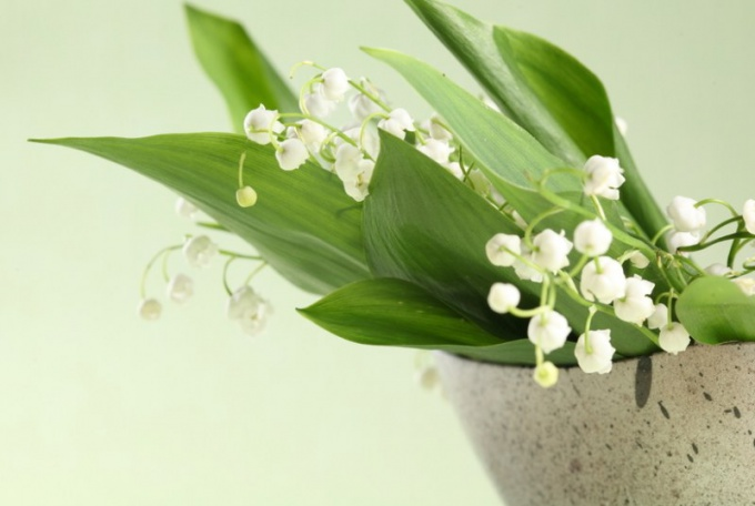 Is Lily of the valley a poisonous plant
