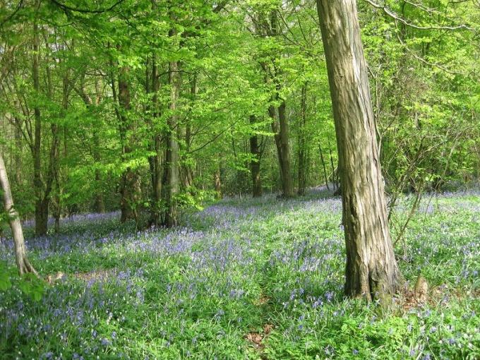 Лес — богатая кладовая природы (фото взято с сайта Morguefile)