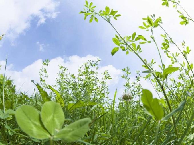 Растения как лекарственное сырье