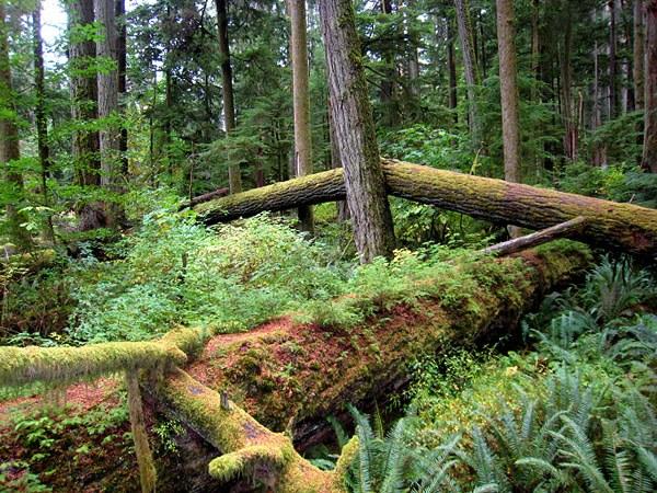 Лес как природная зона