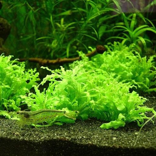 Как вырастить аквариумные растения из семян