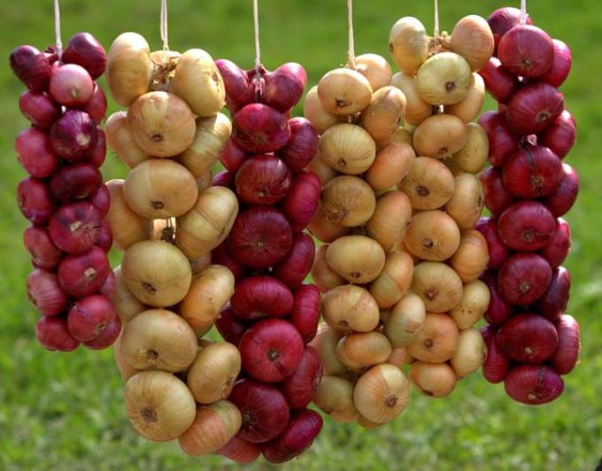 Как вырастить и сохранить лук