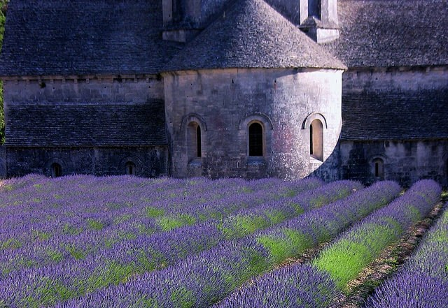 Лавандовое поле в Провансе