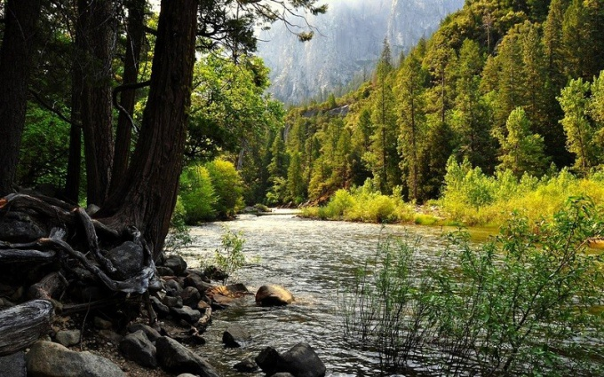 К чему снится река и лес
