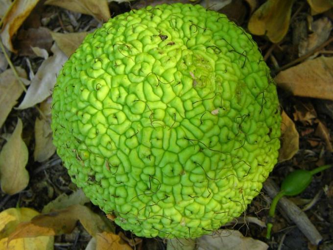 Что такое адамово яблоко