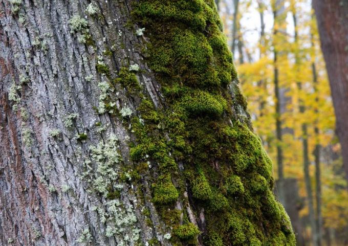 С какой стороны растет мох