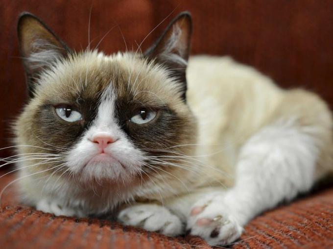 Как лечить отит у кота