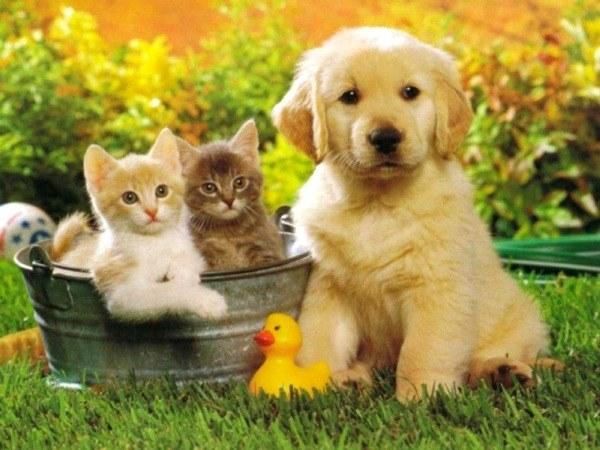 Какие болезни передаются от домашних животных