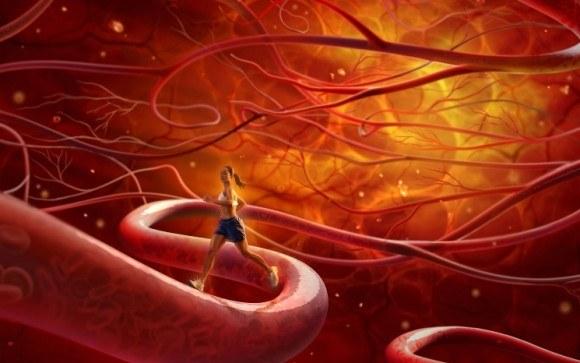 Почему кровь не течет в обратном направлении